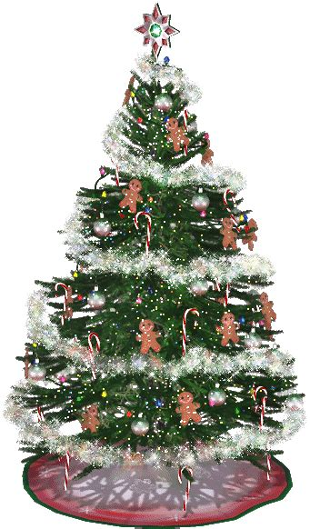 logged netted christmas trees in manchester gif sapin de no 234 l