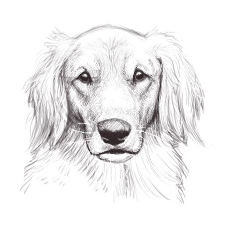 puppy sketches sketches sketch coloring page
