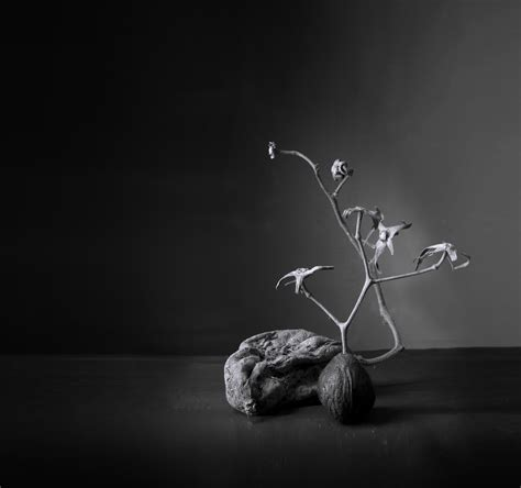 imagenes minimalistas naturaleza quot naturaleza muy muerta quot para el proyecto minimalismo de