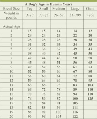 age calculator by breed age calculator and chart convert by breed to human years autos post