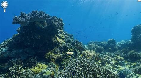 imagenes reales del fondo del mar descubre el fondo del mar a trav 233 s de google maps abc es