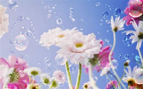 desktop wallpaper in flowers bright flower wallpaper beautiful desktop wallpapers 2014
