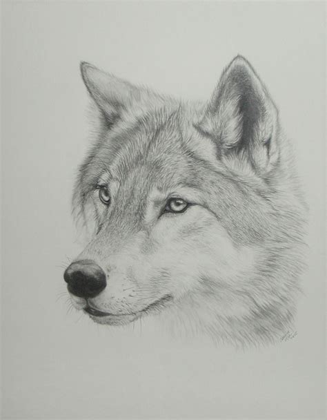 Drawing Wolf by Wolf Drawing 3d Drawing