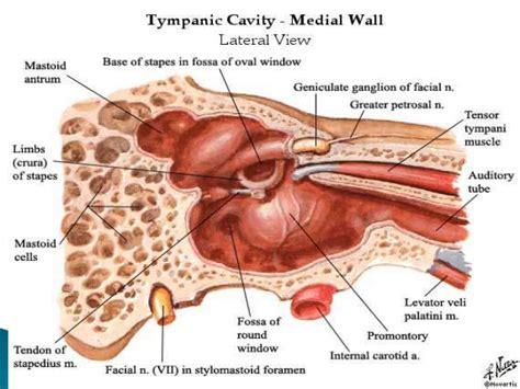 Mastoid Cavity Anatomy