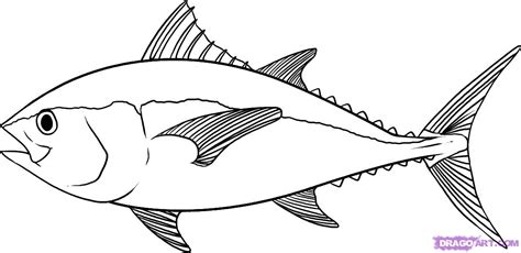 how to draw a tuna step by step fish animals free