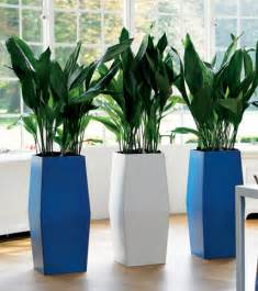 placed in indoor plant pots add the of any