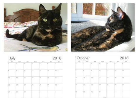cat gallery calendar 2018 now available the 2018 conscious cat wall calendar the conscious cat