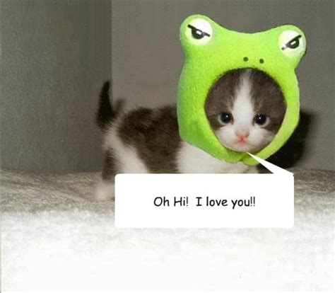 Cute I Love You Meme - cute kitten memes quickmeme