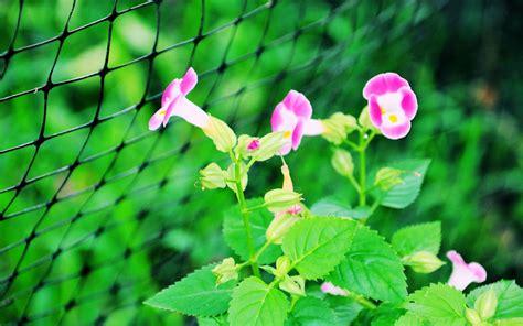 imagenes flores extraordinarias fondos gratis de plantas y flores tropicales 1920x1200