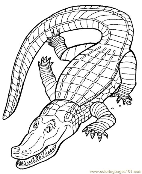 alligator coloring page pdf coloring pages crocodile aligator coloring page 07