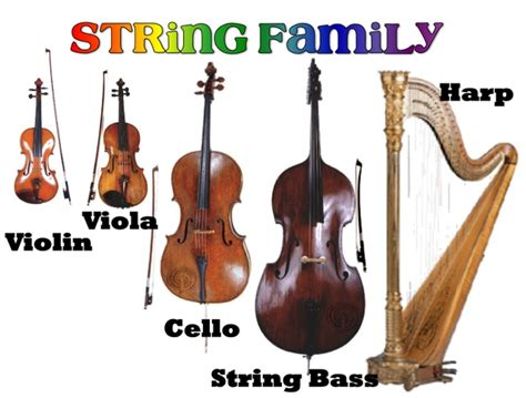 string section instruments string family more on website instruments of the