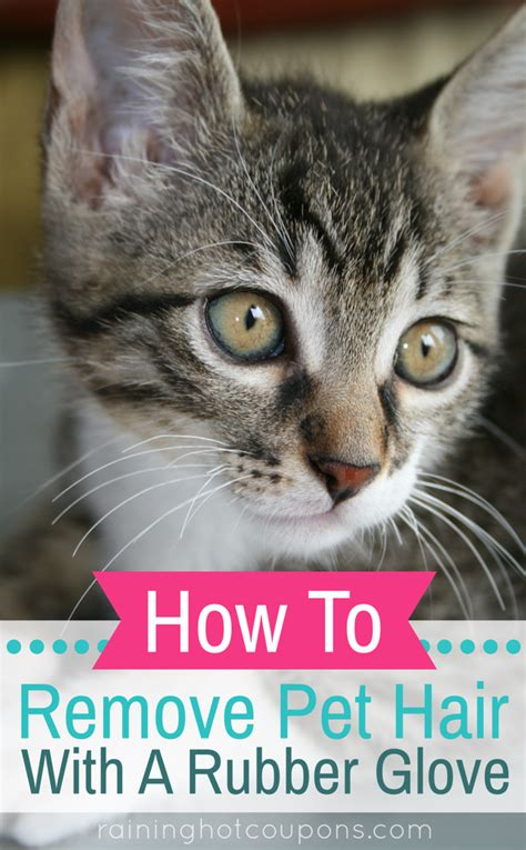 How To Remove Pet Hair From by How To Remove Pet Hair With A Rubber Glove