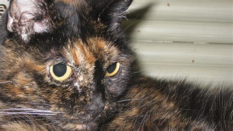 oldest on record two the world s oldest cat living passes away guinness world records