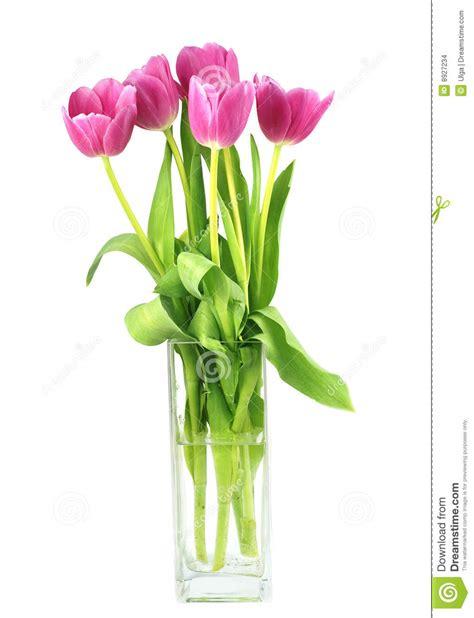 tulipani in vaso tulipani in un vaso immagini stock immagine 8927234