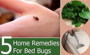 how to bed bugs home remedies 5 bed bugs home remedies treatments cure