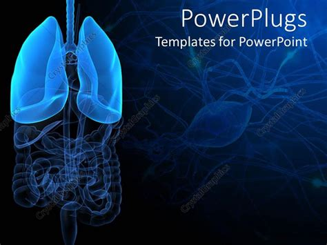 powerpoint templates urinary system powerpoint template 3d representation of lungs and human