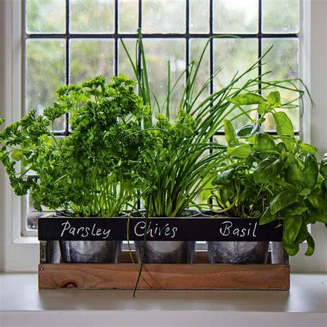 Windowsill Planter Box indoor herb garden kit by viridescent wooden windowsill planter box for t ebay