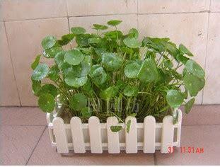 Pot Persegi Panjang Plastik buy grosir persegi panjang pot bunga from china