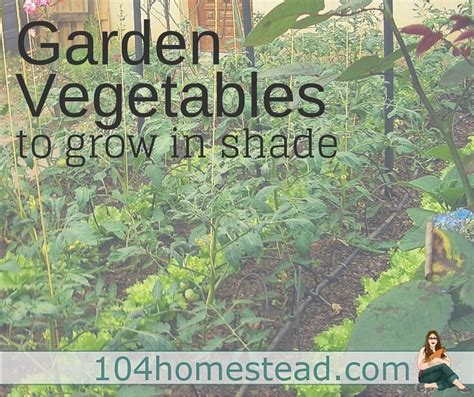 what garden vegetables like shade garden vegetables to grow in the shade