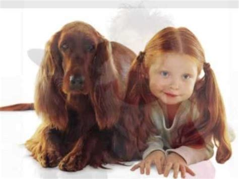 what does a setter dog look like dogs who look like their owners get your pet website