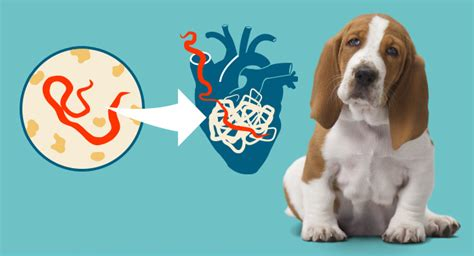 heartworm treatment for dogs does heartworm prevention treatment necessary for my underrated or overrated