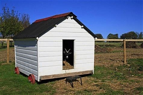 Pygmy Goat Shed how to raise and care for pygmy goats