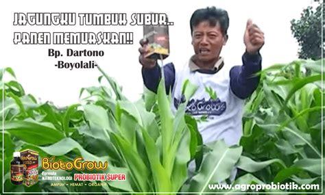 Biotogrow Pupuk Organik Cair pupuk tanaman melon agroprobiotik pertanian