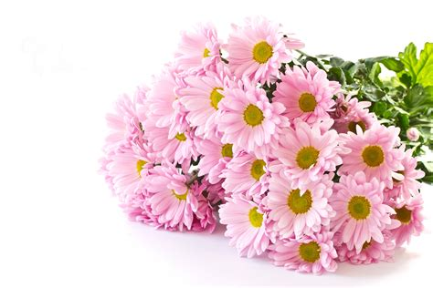 mum flower arrangement pink jpeg image bouquets pink color flowers chrysanthemums white background