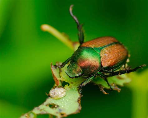non toxic garden pest non toxic pest the best way to pests