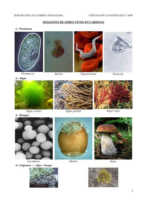 imagenes no realistas ejemplos im 225 genes de seres vivos eucariotas