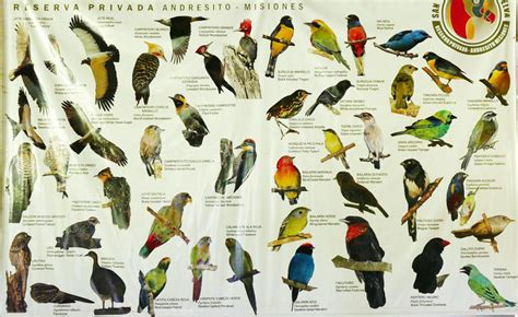 all birds in the world list