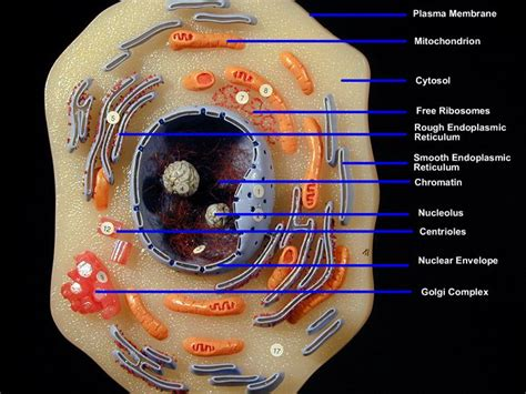 homemade cell model project ideas bing images biology