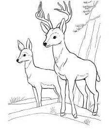 deer coloring page free printable deer coloring pages for