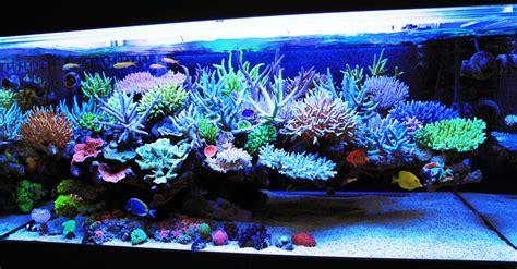 aquascape reef tank mr kang s korean reef aquarium is a field of exquisite corals on an elegant aquascape