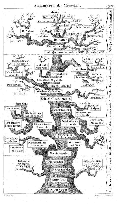 the and science of ernst haeckel multilingual edition books stammbaum des menschen ernst haeckel ernst