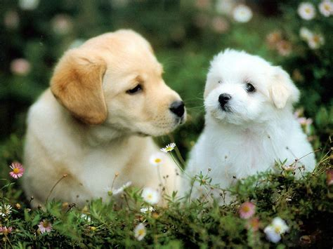 cute dog wallpaper wallpaperfreeks hd cute dogs wallpapers 1600x1200