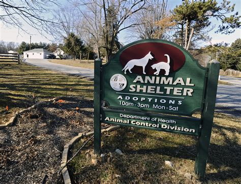 Animal Shelters in Maryland