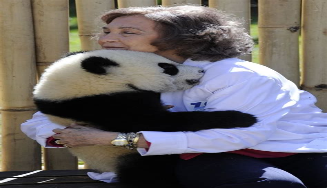 Bear Hug Human