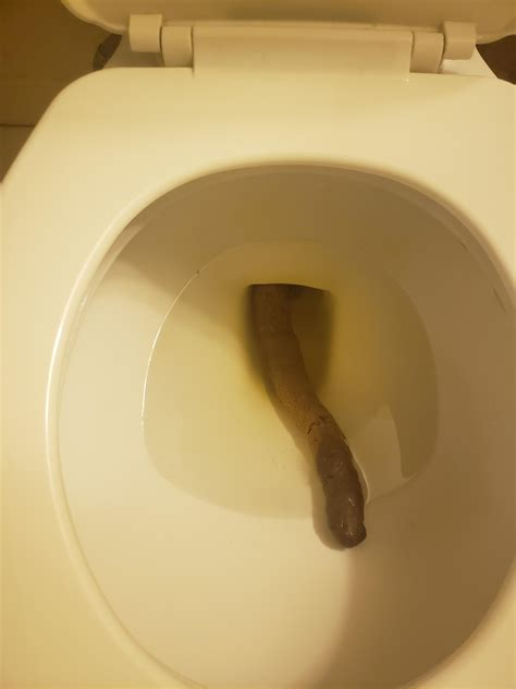 Gallery of pictures of real poop in the toilet