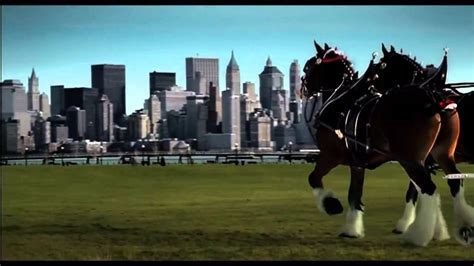 Clydesdale Horses 911 Commercial