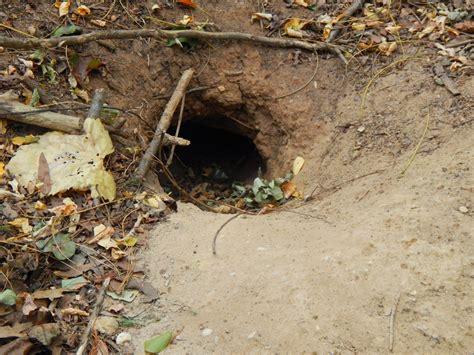 Groundhog Hole