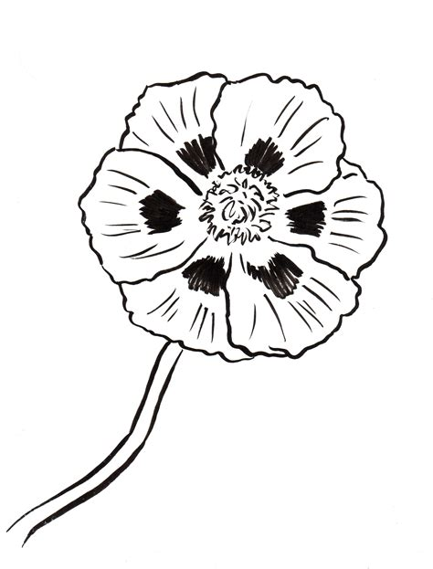 Galerry yellow elder flower coloring page