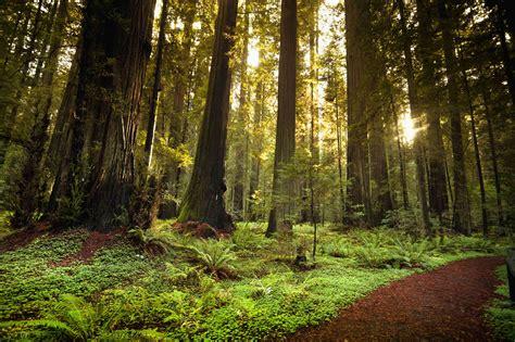 Redwood California Scenery