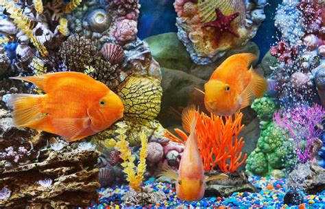 Underwater Tropical Fish