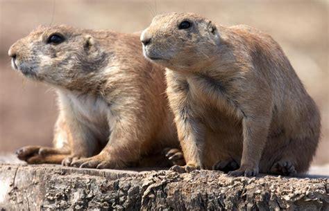 Washington Animals