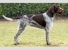 Sélection d?un chien   CKC