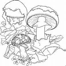 Window Color Malvorlagen Pilze Kleine Pilze Ausmalbild Malvorlage Blumen