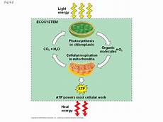 an accounting of atp production by cellular respiration sliderbase