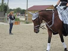 ffe trouver un cheval cheval de la ffe pour un dressage d 233 guis 233 p j aimerai