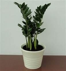 Pflanzen Für Dunkle Ecken In Der Wohnung - zimmerpflanzen f 252 r dunkle r 228 ume lagerhaus